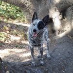 Adolescent dog in a tree