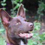 Private dog training, Santa Cruz