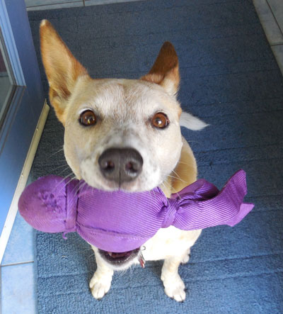 Dog with purple toy