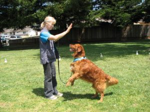 Woman and golden retriever practicing a trick.