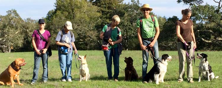 dog training class group