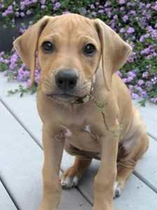 puppy with flower in mouth